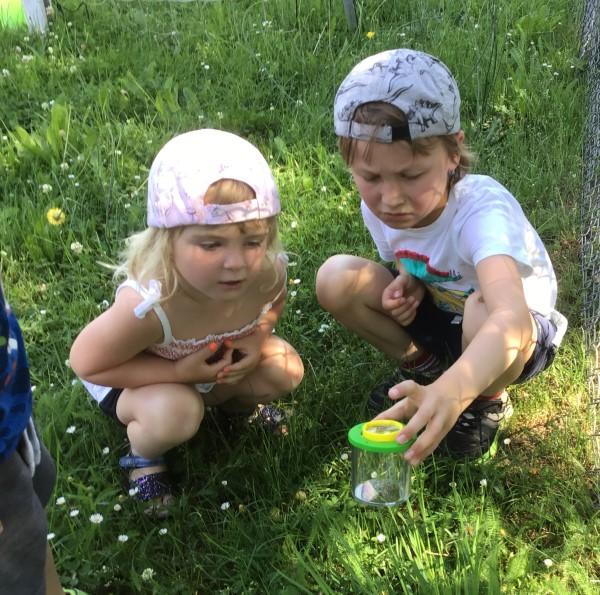Was krabbelt denn da? Was ist das für eine Pflanze? Die Kindergartenkinder der Erdgruppe entdecken den Lebensraum Wiese